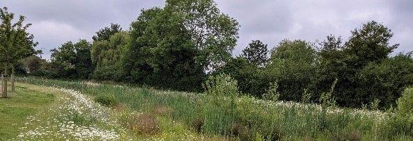 Wild Aylesbury Vale
